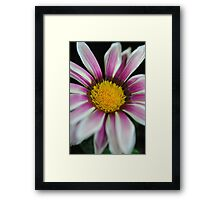 Pink and White Striped Flower With pollen Framed Print