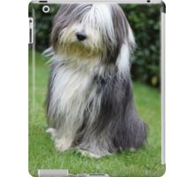 Cool Bearded Collie