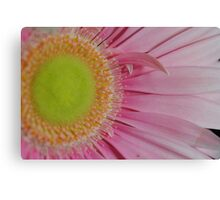 Pink and Yellow Daisy Canvas Print