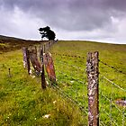 The Ochil Series - Winds and Fences (Colour Version) by Kevin Skinner