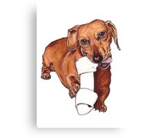 Sausage dog heaven Canvas Print