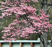 Spring Tree (Please view larger) by rasnidreamer