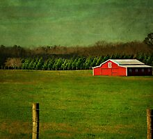 The Red Farmhouse by Scott Mitchell