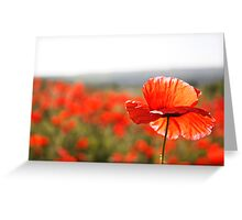 one scarlet morning Greeting Card