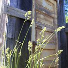 Outhouse out Back by Debbie Roelle
