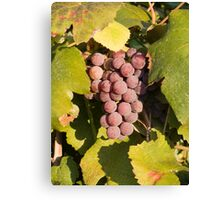 A Vineyard Delight Canvas Print