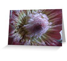 Protea >> Greeting Card