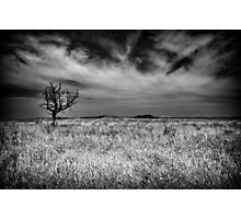 Bare tree Photographic Print