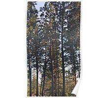Nine Mile Trees Poster