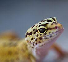 leopard gecko by Jen Wahl