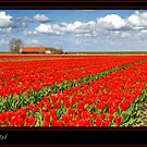 Spring in Red by Adri  Padmos