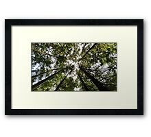 From a Seedlings Perspective Framed Print