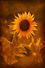Textured Sunflower, Botswana, Africa. by photosecosse /barbara jones