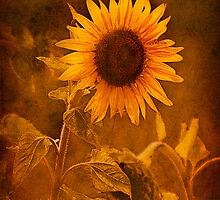 Textured Sunflower, Botswana, Africa. by PhotosEcosse