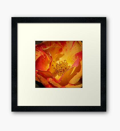 Multi Colored Bloom Framed Print
