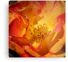 Multi Colored Bloom Metal Print