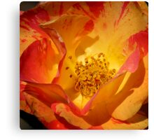 Multi Colored Bloom Canvas Print