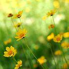 June Flowers by VikaRayu