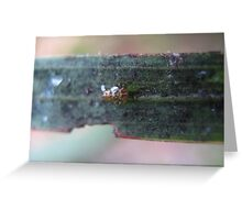 Baby Leafhopper Greeting Card