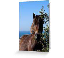 wild exmoor pony Greeting Card