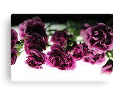 Pink Carnations on White Light Canvas Print