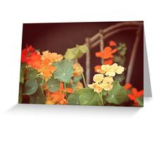 Vintage Nasturtiums Greeting Card