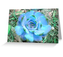 Hens and Chicks - Blue Hue Greeting Card