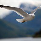 birds by narabia