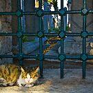 The Graveyard Cat by Barbara  Brown