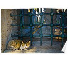 The Graveyard Cat Poster