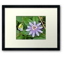 Passion Flower 4 Framed Print