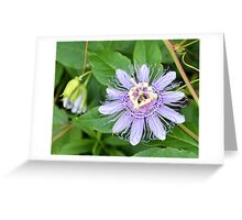 Passion Flower 4 Greeting Card