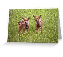 Older Set of Bambies Greeting Card