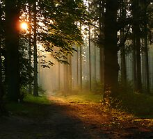 When the sun greated the May morning by jchanders