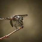 DragonFly by jamieart