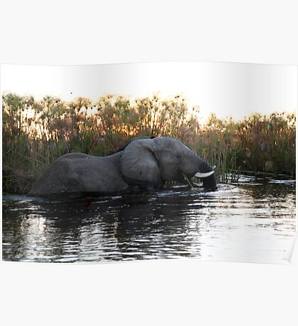 Elephant in the Reed Bed Poster