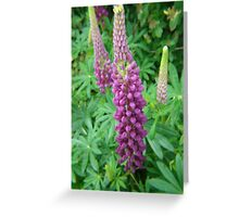 Mauve Lupins Greeting Card