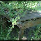 Homestead Overgrown by Jena Ferguson