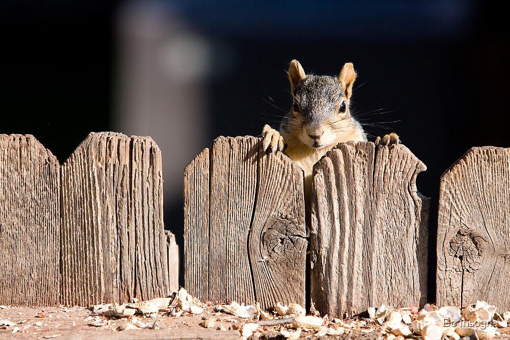 Squirrel on the fence by Bo Insogna