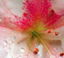 'Pink Azalea Macro' Sticker