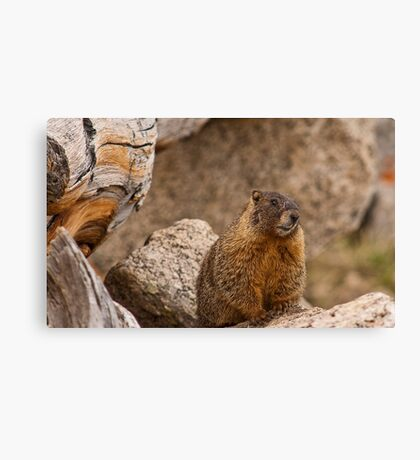 If Someone Asks If You're A Photographer For National Geographic . . . Canvas Print