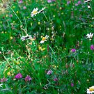Mountain Wildflowers by Anthony Pierce