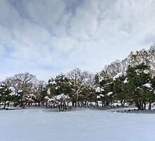 Snowscape. Photographed in the Golan Heights, Israel  by PhotoStock-Isra