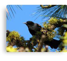 Red wing black bird Klamath Falls Oregon Canvas Print