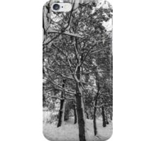 Close-up of pine leaves in snow.  iPhone Case/Skin