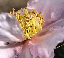 Gold Dust on Camellia by Joy Watson