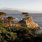Evening Light on Lone Cypress by Patty Boyte