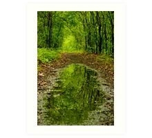 Reflections in the woods Art Print
