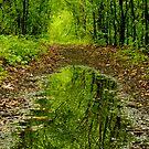 Reflections in the woods by (Tallow) Dave  Van de Laar