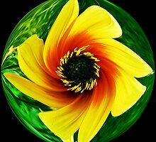 #8  Twisted Dogwood Flower by MyInnereyeMike